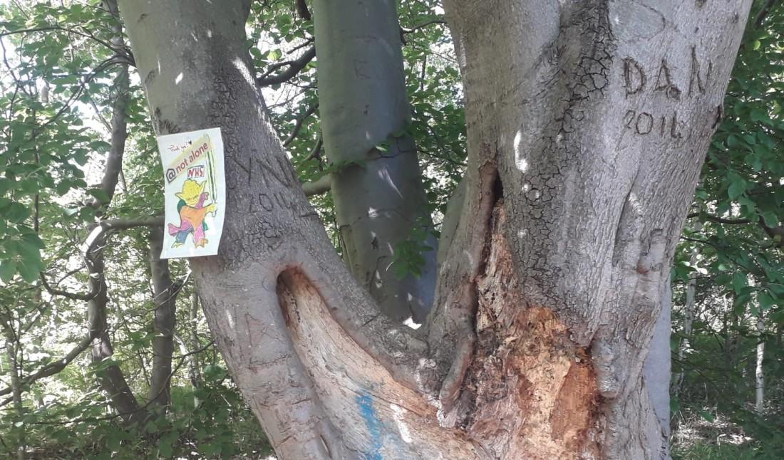 NHS Tree (edit)